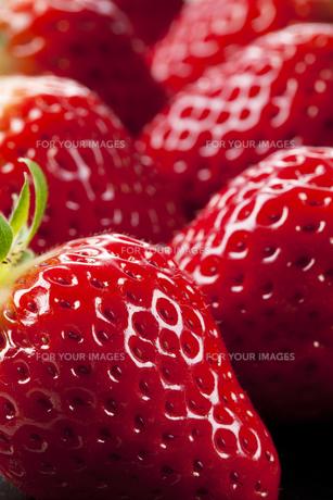 苺の写真素材 [FYI00334548]