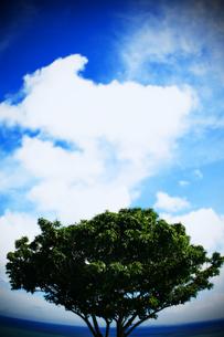 海に生える木の素材 [FYI00334710]