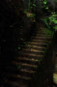 苔の生えた階段の写真素材 [FYI00334739]