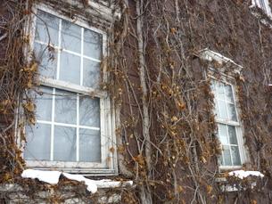 つる草の窓の写真素材 [FYI00334742]