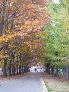 秋の小道の写真素材 [FYI00334762]