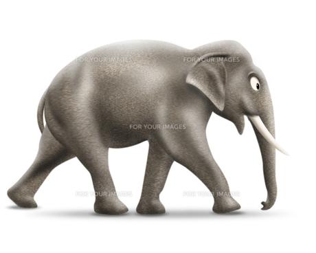 象の写真素材 [FYI00334939]