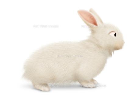 ウサギの写真素材 [FYI00334947]