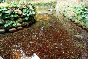 清水湧水の写真素材 [FYI00335015]