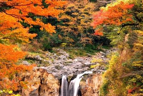鮎帰りの滝と紅葉の写真素材 [FYI00335033]