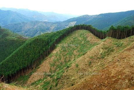 伐採直後の杉山の写真素材 [FYI00335061]