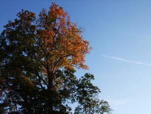秋の声の写真素材 [FYI00335171]
