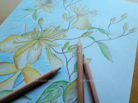 黄色い花の絵の写真素材 [FYI00335175]