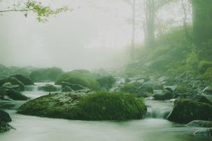 苔むすの写真素材 [FYI00335229]