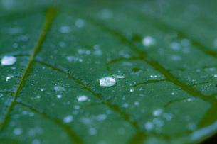 雨上がりの朝の写真素材 [FYI00335234]
