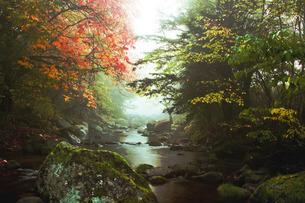 秋の訪れの写真素材 [FYI00335248]