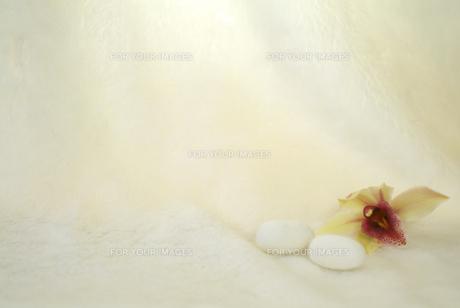 繭玉の写真素材 [FYI00335352]