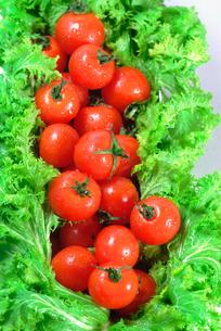 新鮮なトマトとレタスの写真素材 [FYI00335390]