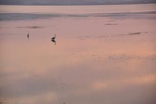 夕暮れの湖にたたずむサギの素材 [FYI00335394]