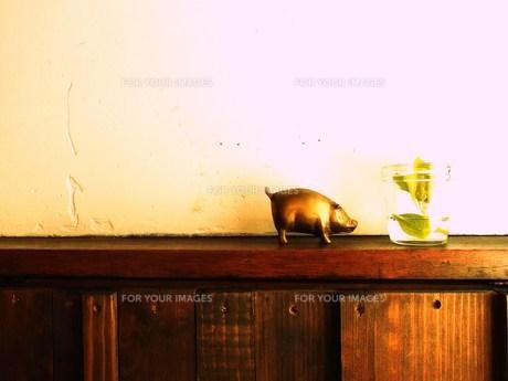 金の豚の素材 [FYI00335610]