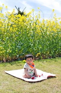 菜の花とひなたぼっこの写真素材 [FYI00335638]