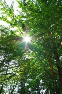 木漏れ日 光 太陽 夏の写真素材 [FYI00335667]