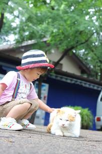 猫をなでる男の子の写真素材 [FYI00335703]