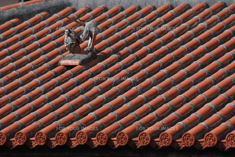 赤瓦の屋根とシーサーの写真素材 [FYI00335839]