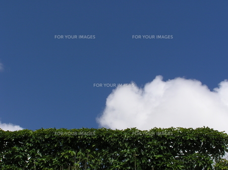 夏の終わりの雲の素材 [FYI00335856]