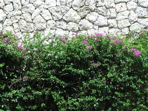 琉球石灰岩と花の素材 [FYI00335882]