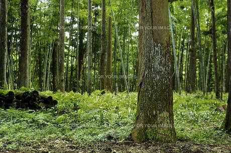 森林の素材 [FYI00336151]