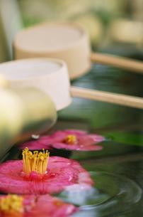 手水鉢と椿の素材 [FYI00336166]
