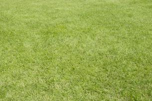 芝生の素材 [FYI00336224]