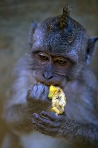 猿のヘアーの写真素材 [FYI00336449]