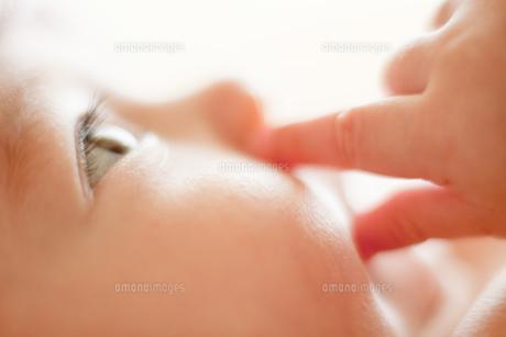 つぶらな瞳の写真素材 [FYI00336530]