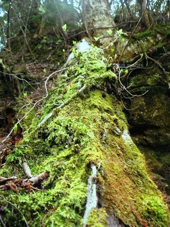 森の息吹きの写真素材 [FYI00336543]