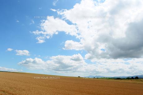 麦畑麦の写真素材 [FYI00336638]