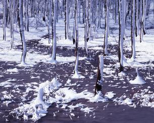 遅春の林の素材 [FYI00336709]
