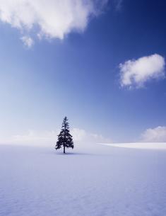 丘の一本の木の素材 [FYI00336734]