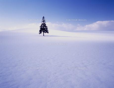 厳冬の朝の素材 [FYI00336739]