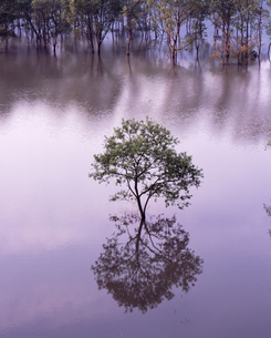 新緑の湖の写真素材 [FYI00336765]