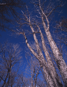 冬晴れの林の写真素材 [FYI00336781]