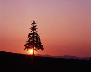 黄昏のツリーの素材 [FYI00336783]