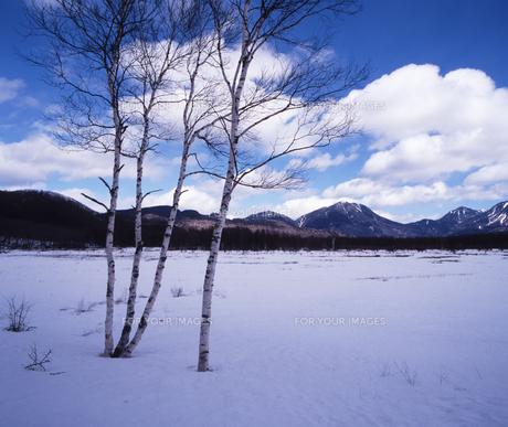 小田代ヶ原冬景色の素材 [FYI00336797]