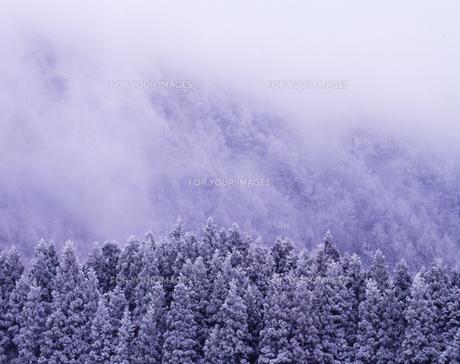 霧氷の林の素材 [FYI00336827]
