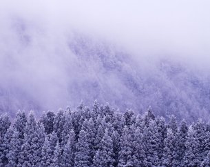 霧氷の林の写真素材 [FYI00336827]