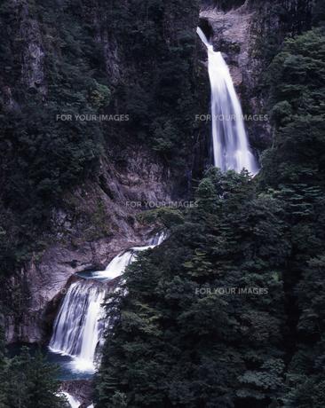 緑の不動七重滝の素材 [FYI00336899]