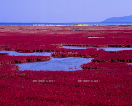 真紅の湖畔の素材 [FYI00336948]