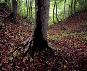 新緑の森の写真素材 [FYI00336966]