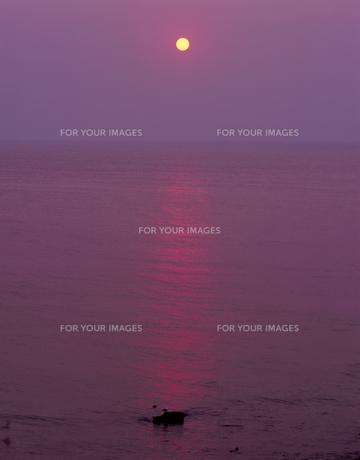 天売島の昇陽の素材 [FYI00336994]