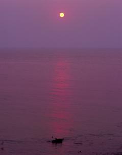 天売島の昇陽の写真素材 [FYI00336994]