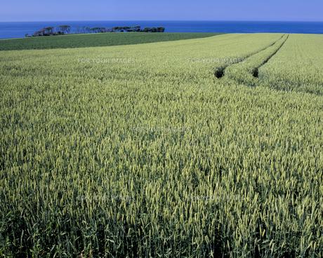 オホーツクの見える丘の素材 [FYI00337002]
