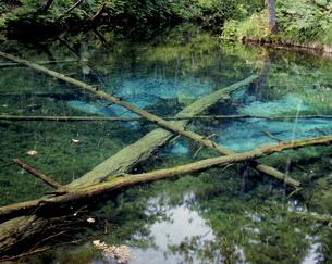 夏の神の子池の写真素材 [FYI00337025]
