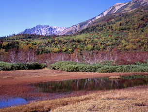 秋の栂池自然園の写真素材 [FYI00337040]