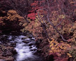 紅葉の照葉峡の写真素材 [FYI00337120]